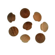 5/16 inch Button Top Wood Plugs