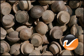 5-16-inch-walnut-button-top-wood-plugs.jpg